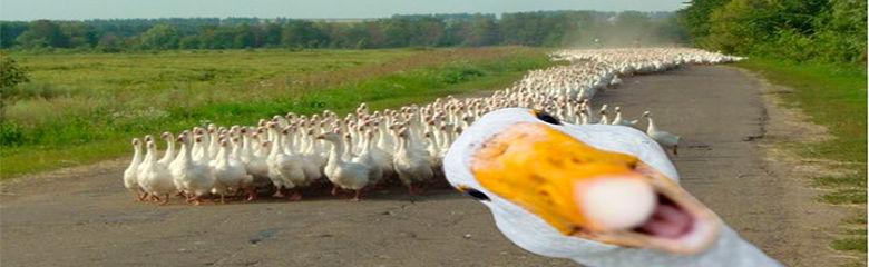 Golden Goose de Dima Blanco